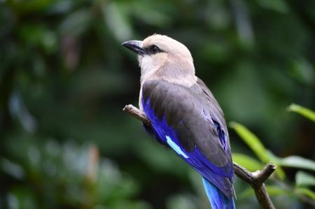 Image result for white bird facing left