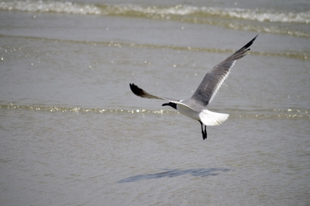 A single seagull flying just above the beach