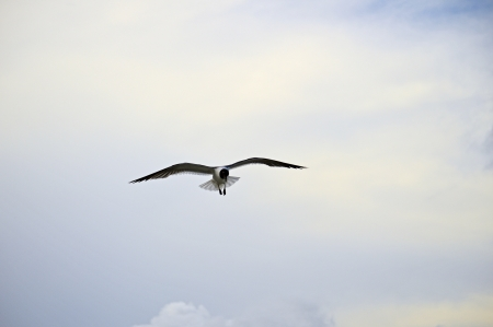 A seagull in flight against a blue sky Imagens
