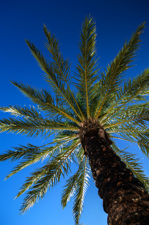 The top of a palm tree against a blue sky