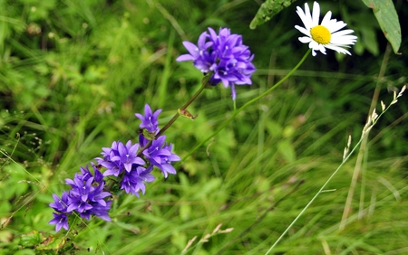 glades: blue forest flower in bright green grass