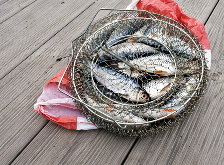 caught fresh fish in a metal cage