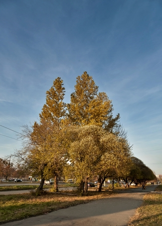 large autumn trees against the blue sky in the suburbs Stock fotó