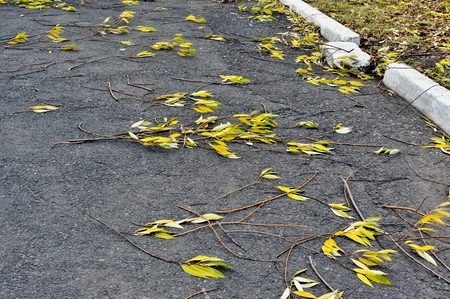 branches torn off by a wind with yellow-green autumn leaves on asphalt Stock Photo