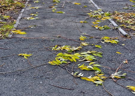 branches torn off by a wind with autumn leaves on asphalt Stock Photo