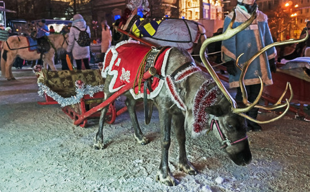 reindeer in the new year harness in the city square at night
