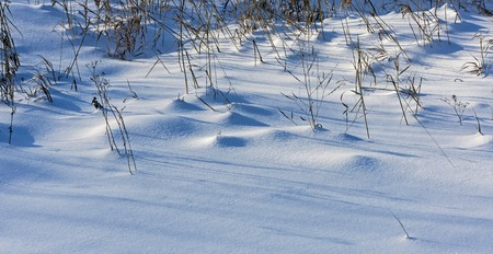 light and shadow on snow, dry plants covered with snow in snowdrifts lit by the morning sun Banco de Imagens