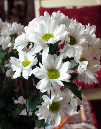 beautiful bouquet of white Bush chrysanthemums near the window Banco de Imagens