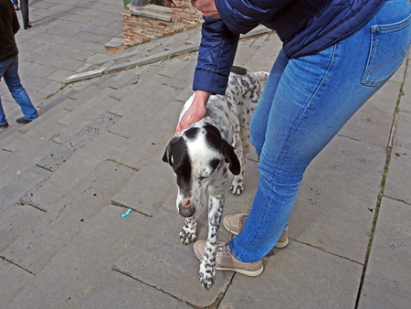 man stroking a dog like a Dalmatian on the street