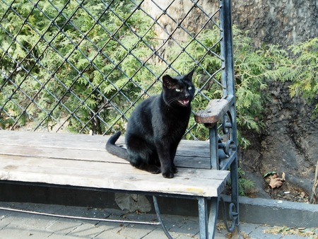 black hungry cat sitting on a bench in the Park
