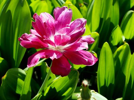 pink flower in the garden on the background of gentle light green