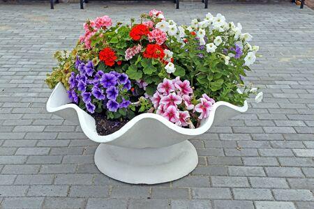 lush fresh colorful Petunia in the garden Stock fotó
