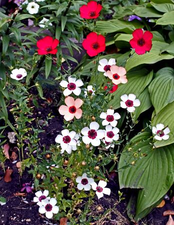 fresh beautiful colorful flowers in the garden Banco de Imagens