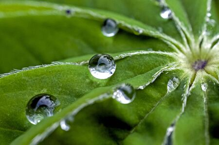 dew drops on green leaves in the early morning, macro, narrow focus area