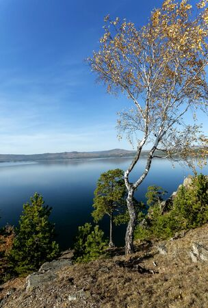yellow autumn birch with almost fallen leaves and green pines on the rocky shore of lake Turgoyak in the southern Urals 写真素材