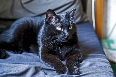 black cat lies and rests on the couch in a warm place Reklamní fotografie