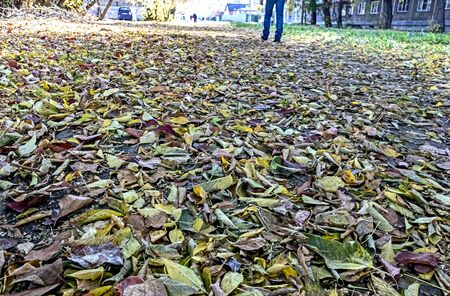 colorful fallen autumn leaves all over the sidewalk, the view from the bottom Reklamní fotografie