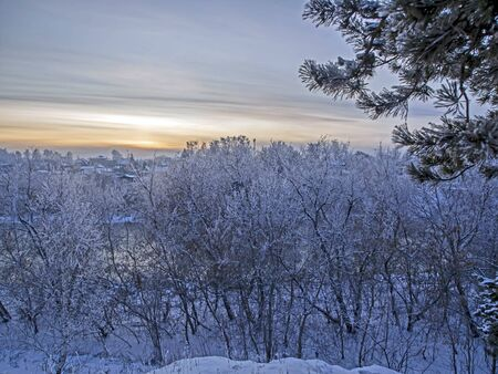 evening winter landscape outside the city, trees covered with frost, the setting sun Stock Photo