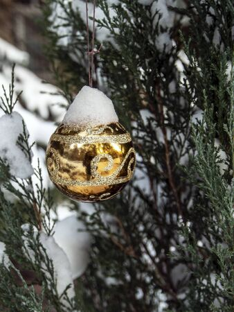 Christmas tree toys covered with snow on a Christmas tree in the forest in winter, instead of a Christmas tree, a thuja tree Banco de Imagens