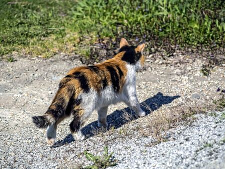 young bright three-haired cat walks in the garden