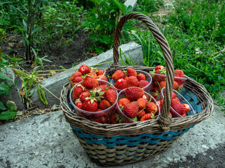 basket with fresh ripe strawberries arranged in cups on a blurred natural background