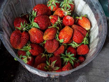dish with fresh red ripe strawberries, close-up Фото со стока