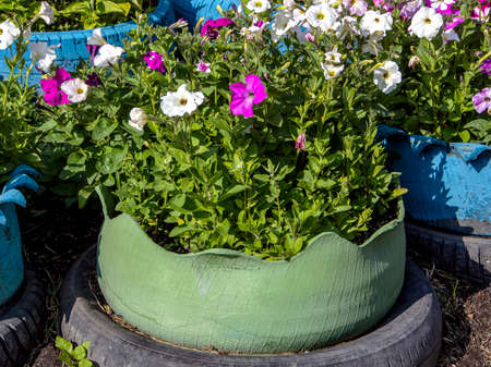 small flower bed in an old car tire