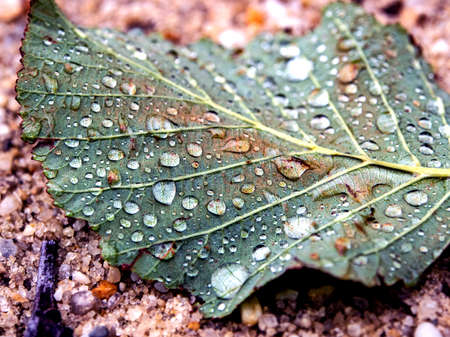 morning dew on a green leaf lying on the sand, macro, narrow focus area