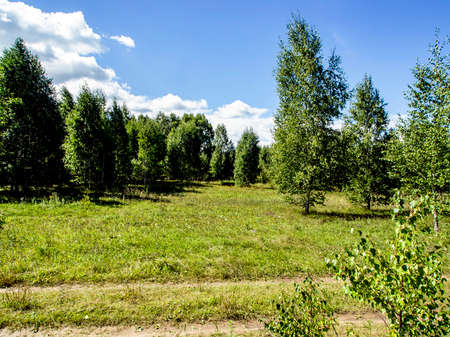 forest edge on a Sunny day, blue sky with light clouds, green field, South Ural, Russia 免版税图像