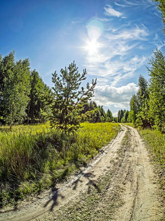forest edge on a Sunny day, blue sky with light clouds, green field, South Ural, Russia
