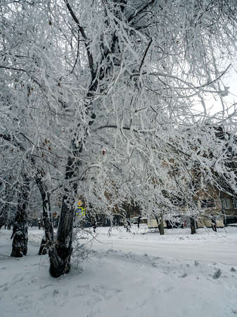 tree branches covered with frost in the suburbs, Southern Urals 免版税图像 - 163852917