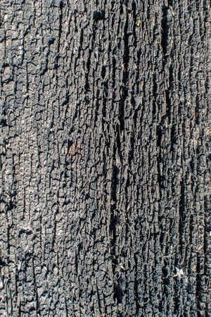 texture of the surface of an old wooden board located in the open air for many years 免版税图像 - 163852957