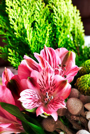 delicate pink fragile flower with the Latin name Alstroemeria in the bouquet, macro 免版税图像