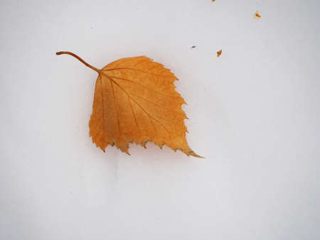 yellow dry birch leaf on the snow in the winter forest 免版税图像