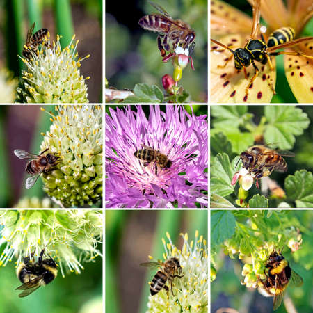 collage of bees and other insects pollinating flowering plants 免版税图像