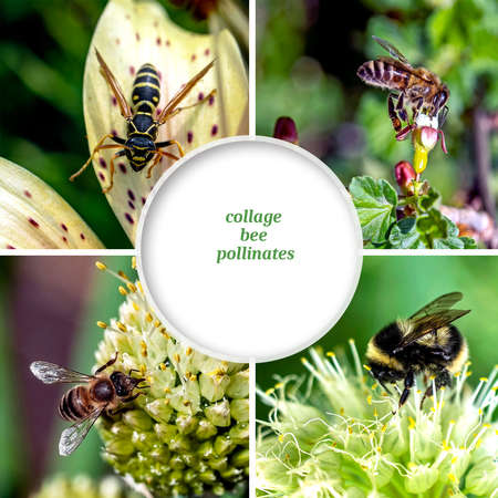 collage of bees and other insects pollinating flowering plants, copyspace
