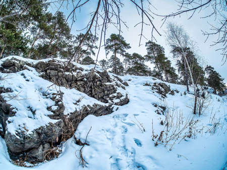view of pine trees growing on the rocky and steep bank of the Miass river in winter, snow-covered banks, forest, countryside, Chelyabinsk, Kashtak, Southern Urals 免版税图像 - 164864985