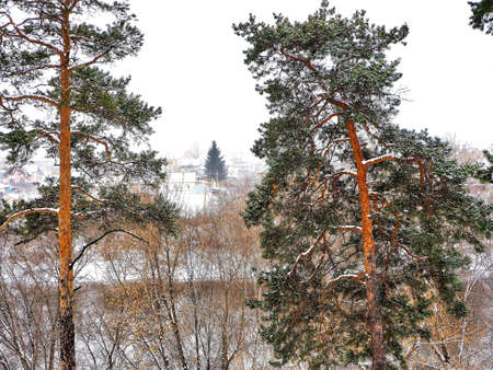 view of pine trees in winter during snowfall and fog, forest, countryside, in the distance you can see the village of Kashtak, Chelyabinsk, Southern Urals