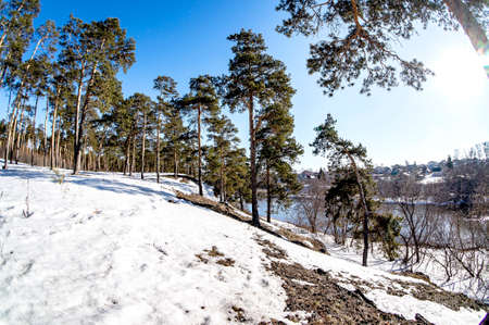 view of pine trees in spring on a sunny day on a steep river bank, rural area, in the distance you can see the village of Kashtak, Chelyabinsk, Southern Urals