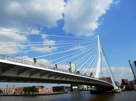 Erasmus bridge (Erasmusbrug), Rotterdam, The Netherlands photo