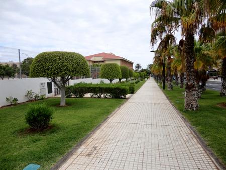 adeje: Nicely shaped Trees in Costa Adeje, Tenerife, Canary Islands, Spain