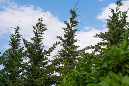 clear sky: Looking the clear sky through the trees. Stock Photo
