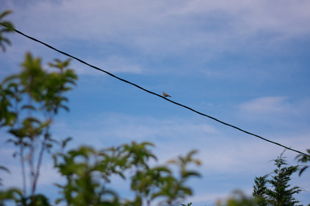 pidgeon: Distant view of a pidgeon resting on a wire.