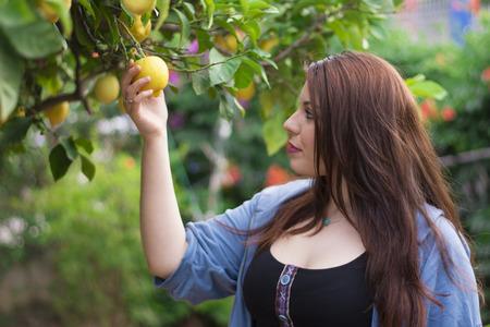 lemon tree: Mujer joven cortar un lim�n del �rbol de lim�n Foto de archivo