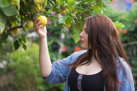 lemon tree: Young woman cutting a lemon from the lemon tree