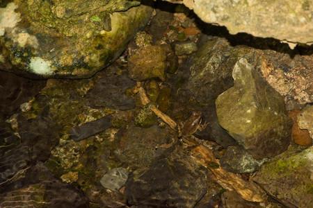Little frog on the rocks