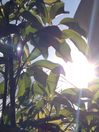 sol: El sol siempre sale para todos   Stock Photo