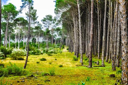 sequential: Trees sequential from Tonga, el Kala, Algeria