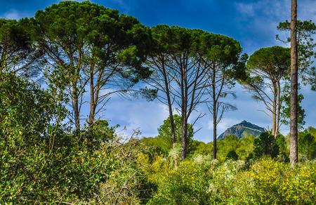 Green Tree in sky from Tonga, el Kala, Algeria Stock Photo
