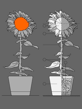 flower blueprint Vector